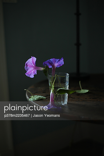 Still life of purple flowers - p378m2235467 by Jason Yeomans