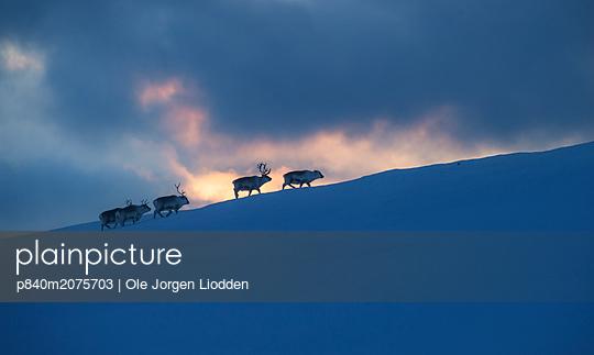 p840m2075703 von Ole Jorgen Liodden