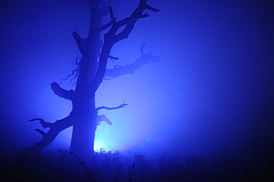 Silhouette of a tree bathed in blue light - p1072m828834 by Brian Korteling