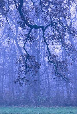 Germany, Bavaria, autumn forest, morning mist - p300m998641f by Christina Falkenberg