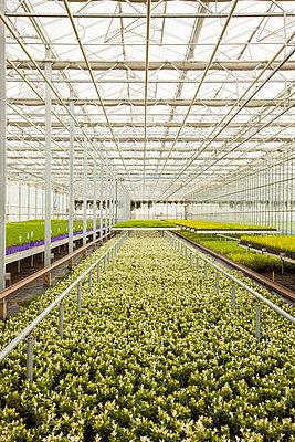 Greenhouse - p902m1031572 by Mölleken
