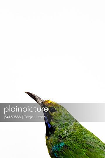 Bunter Vogel - p4150666 von Tanja Luther