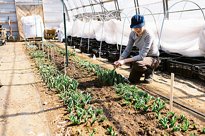 young millennial woman tending to her tulips in her farm high tunnel - p1166m2269674 by Cavan Images
