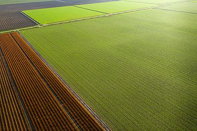 Netherlands, Noord-Brabant, Oud Gastel, Aerial view of agricultural fields - p924m2271284 by Mischa Keijser