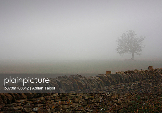Tree silhouette in fog - p378m760842 by Adrian Talbot
