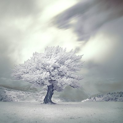 Infrared tree - p1137m932513 by Yann Grancher