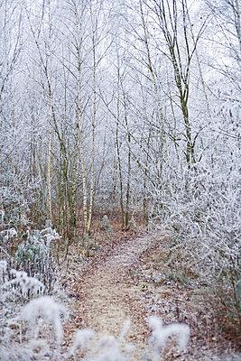 Winterwald - p2686973 von Christof Mattes