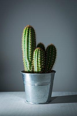 Kaktus - p1149m1104706 von Yvonne Röder