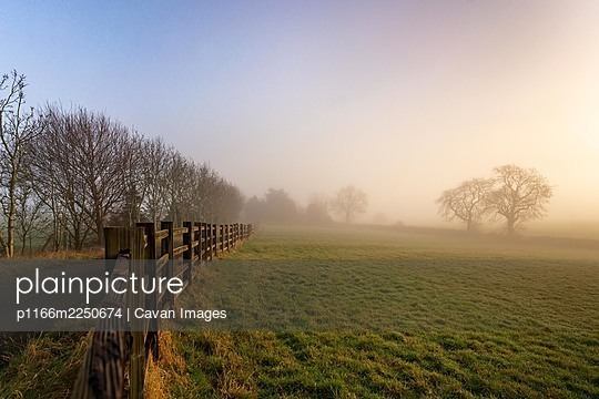 Foggy morning in a farm in english countryside at sunrise with trees - p1166m2250674 by Cavan Images
