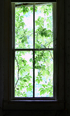 Window - p1019m808005 by Stephen Carroll