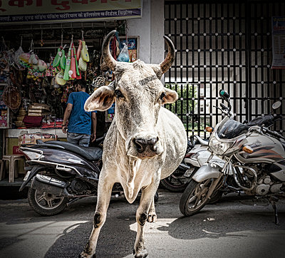 Bull in the city - p1445m1586051 by Eugenia Kyriakopoulou