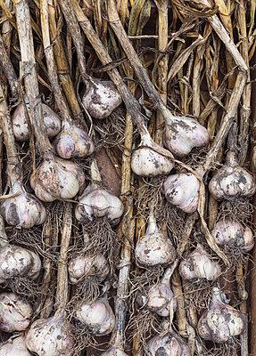 Garlic bulbs - p312m2139639 by Pernille Tofte