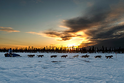 Travis Beals runs on the trail at sunset on his way to the Cripple checkpoint during Iditarod 2016, Alaska.  - p442m1193232 by Jeff Schultz