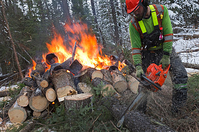Removal of pine trees infested by the mountain pine beetle near Grande Praire, Alberta, Canada - p343m1107084 by Peter Essick