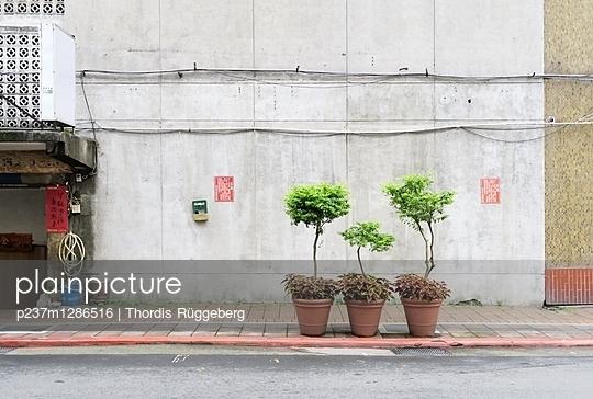 Topfpflanzen an einer Straße - p237m1286516 von Thordis Rüggeberg
