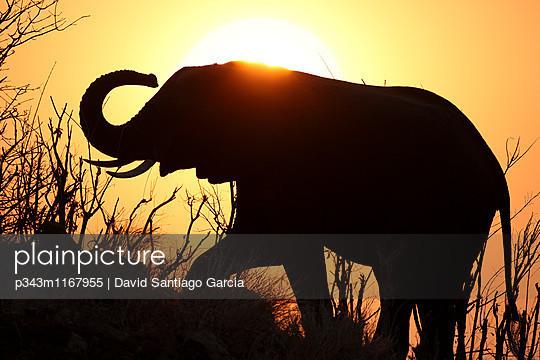 p343m1167955 von David Santiago Garcia