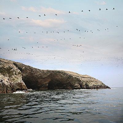 Island Ballestas - p1038m1563936 by BlueHouseProject