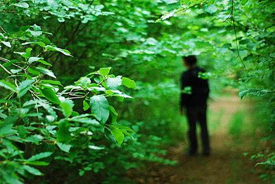 Forest - p1153m951505 by Michel Palourdiau