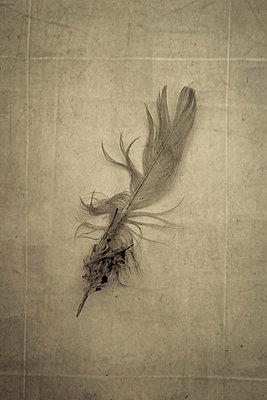Dirty bird's feather - p1228m1123010 by Benjamin Harte