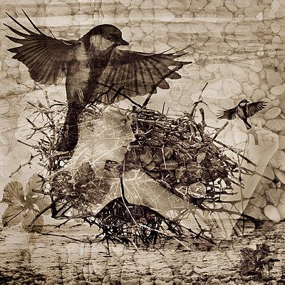 Thorny Nest - p1636m2216333 by Raina Anderson