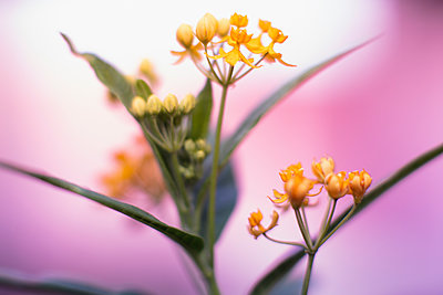Close up yellow flowers - p301m2075584 by Ralf Hiemisch
