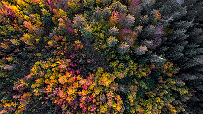 Aerial view of forest in autumn, Gingins, Vaud, Switzerland - p343m1446770 by Raffi Maghdessian