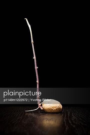 Potato - p1149m1222972 by Yvonne Röder