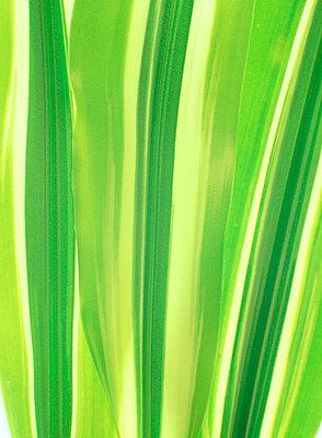 Green Leaf - p3487962 by Berndt-Joel Gunnarsson