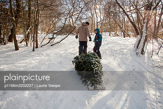 Father and son pulling freshly cut Christmas tree on sled - p1166m2202237 by Laurie Swope