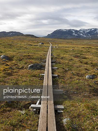 Walking trail in Lapland - p1216m2184525 by Céleste Manet
