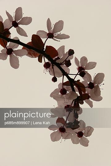 Frühling - p685m899907 von Lena Kah