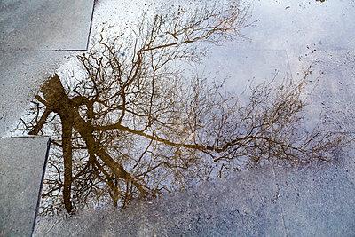 Ein Baum spiegelt sich in einer Pfütze - p1057m1526198 von Stephen Shepherd