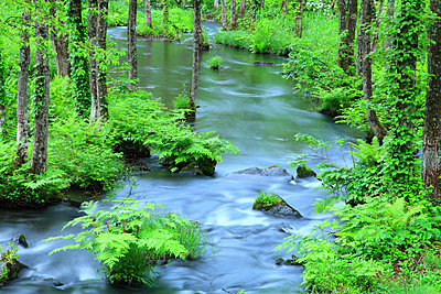 Water stream in the woods, Fukushima Prefecture, Japan - p307m1535076 by Mamoru Muto