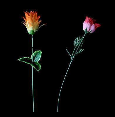 Blumen geschossen - p4500465 von Hanka Steidle