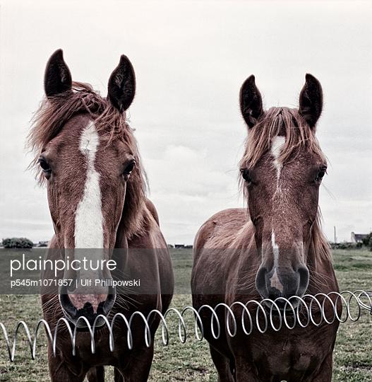 Pferde - p545m1071857 von Ulf Philipowski