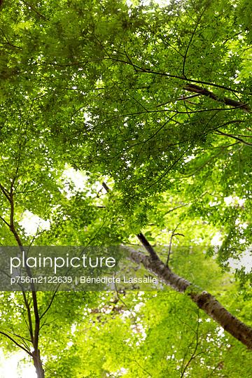 Canopy of leaves - p756m2122639 by Bénédicte Lassalle