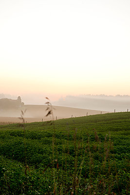 Misty morning in fall - p533m1525210 by Böhm Monika