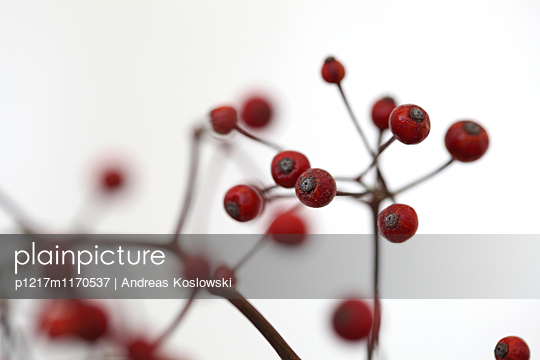 p1217m1170537 by Andreas Koslowski