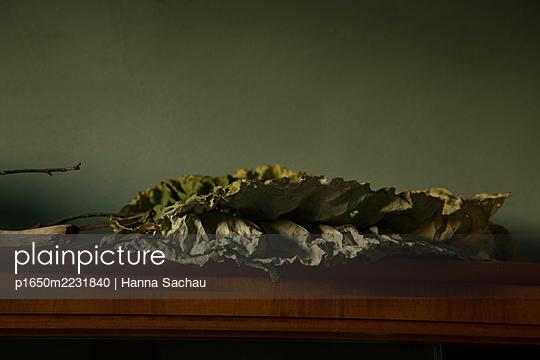 p1650m2231840 by Hanna Sachau