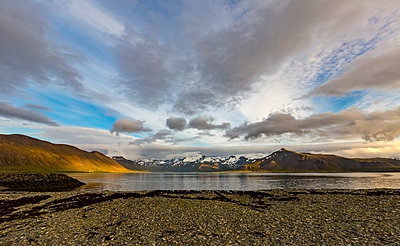 The rich colours of the hills are vibrant in the sunset with the ocean reflection in Western Iceland - p442m2012122 by Alanna Dumonceaux