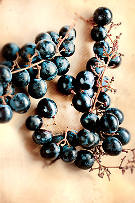Black grapes - p450m1071656 by Hanka Steidle