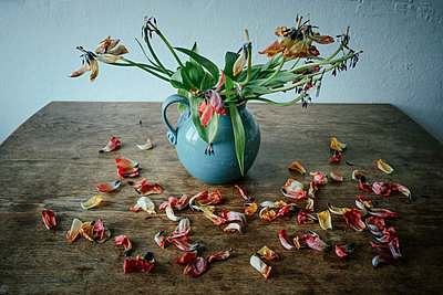 Dead flower petals falling from stems in vase - p301m2070892 by Sven Hagolani