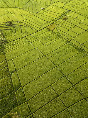 Indonesia, Bali, Aerial view of rice fields - p300m2029764 by Konstantin Trubavin