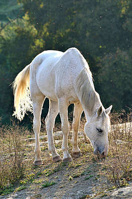 Greezing horse - p8850016 by Oliver Brenneisen