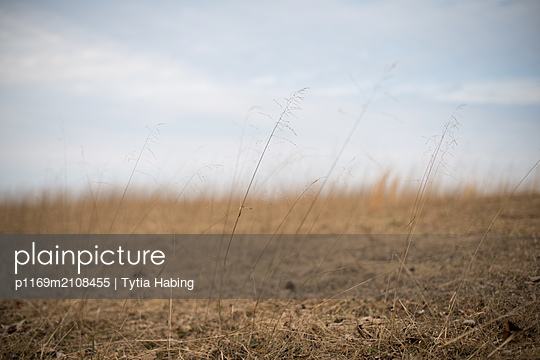 grass in pasture - p1169m2108455 by Tytia Habing