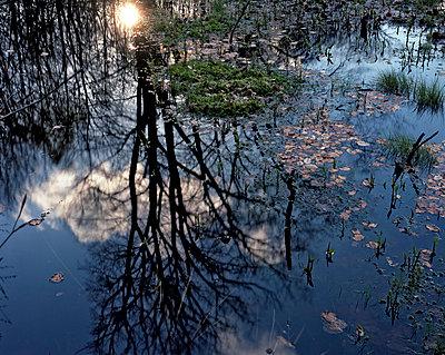 Spiegelung auf der Wasseroberfläche - p1016m792608 von Jochen Knobloch