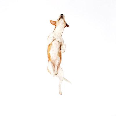 Dog - p4030155 by Helge Sauber