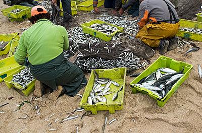 Fischer bei der Arbeit - p451m919240 von Anja Weber-Decker