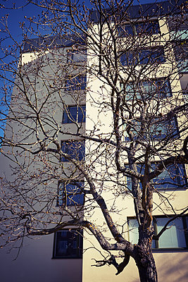 Tree in front of building - p312m1187794 by Dan Lepp