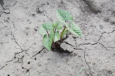 Pflanze - p817m1154749 von Daniel K Schweitzer